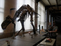 Natural Science museum had the largest dinosaur collection in Europe- it was very well done.