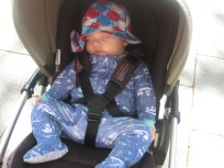 Max, his new hat, and well he showing that he can sleep anywhere.